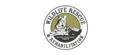 Wildlife-Rescue-Rehabilitation